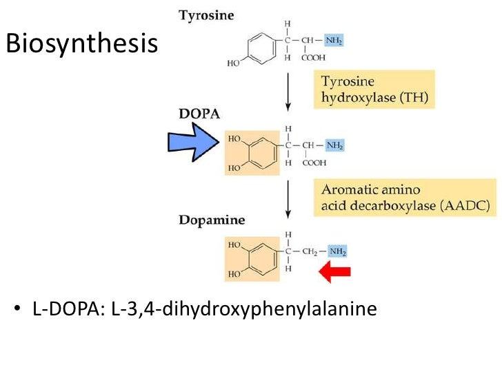 Biosynthesis• L-DOPA: L-3,4-dihydroxyphenylalanine