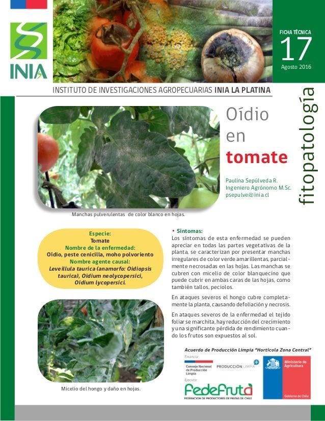 FICHA TÉCNICA 17 INSTITUTO DE INVESTIGACIONES AGROPECUARIAS INIA LA PLATINA fitopatología Paulina Sepúlveda R. Ingeniero A...