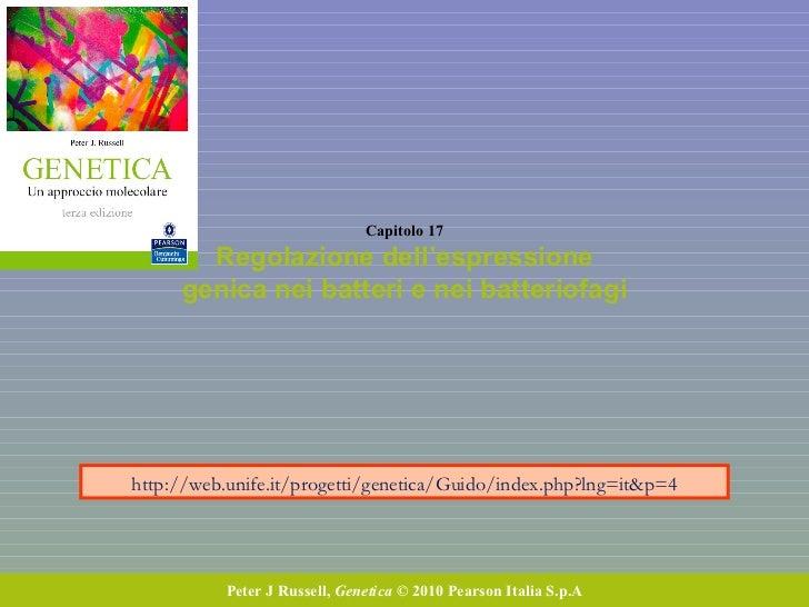 Capitolo 17 Regolazione dell'espressione genica nei batteri e nei batteriofagi Peter J Russell,  Genetica  © 2010 Pearson ...