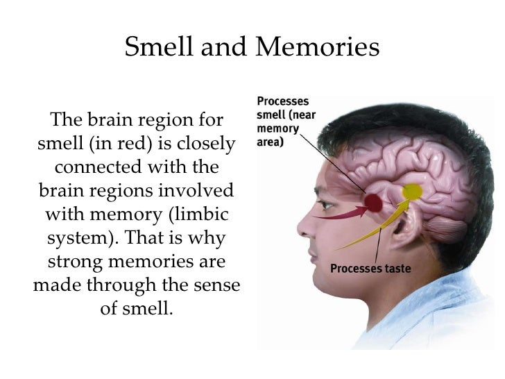 essays on sense of smell Each sense plays its part in memory retrieval and the best way to accurately and in detail commit an event or information to memory and later retrieve that event or information is to use as many senses as possible when encoding but the most effect sense in storing and retrieving detailed information or events is the sense of smell.