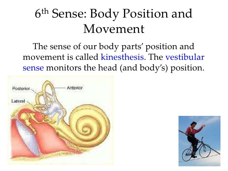 for kinesthesis Kinesthesis is the sense of the position and movement of body parts through  kinesthesis, people know where all the parts of their bodies are and how they are .