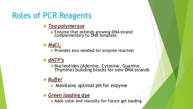 Polymerase chain reaction pcr essay