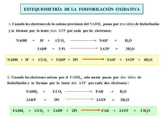 18. transporte de electrones y fosforilacion oxidativa