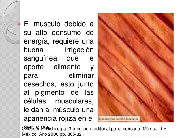 18. celula muscular esqueletica