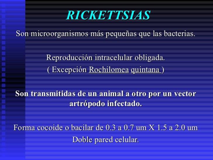 RICKETTSIAS Son microorganismos más pequeñas que las bacterias. Reproducción intracelular obligada. ( Excepción  Rochilome...