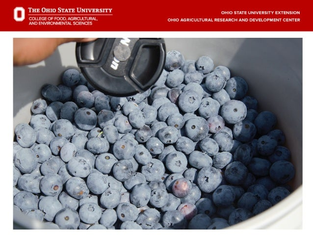 Dr  Gary Gao - Berry Production: Blueberries And Brambles