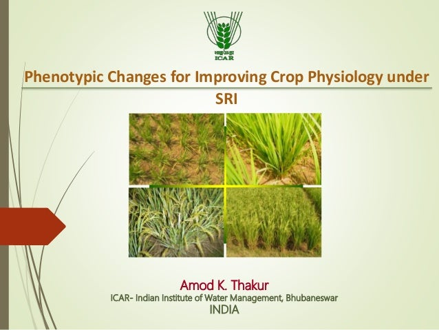 Amod K. Thakur ICAR- Indian Institute of Water Management, Bhubaneswar INDIA Phenotypic Changes for Improving Crop Physiol...