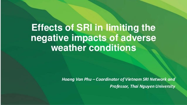 Effects of SRI in limiting the negative impacts of adverse weather conditions Hoang Van Phu – Coordinator of Vietnam SRI N...