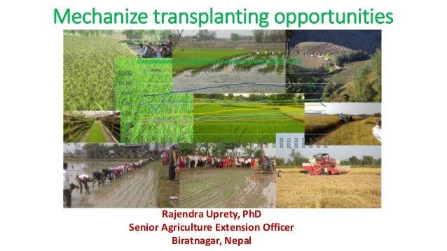 Mechanize transplanting opportunities Rajendra Uprety, PhD Senior Agriculture Extension Officer Biratnagar, Nepal