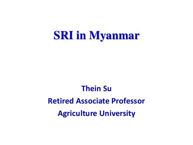 SRI in Myanmar Thein Su Retired Associate Professor Agriculture University