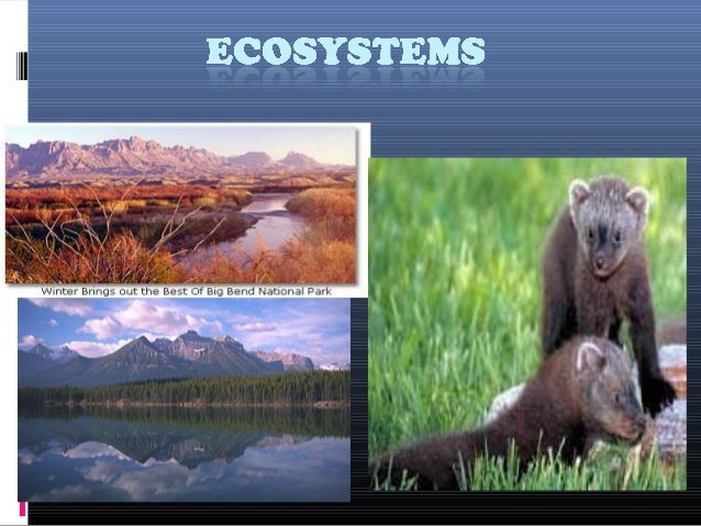 "Ecosytem  The term Ecosystem was first proposed by ecologist A. G. Tansely who defined ecosystem as "" the system resultin..."