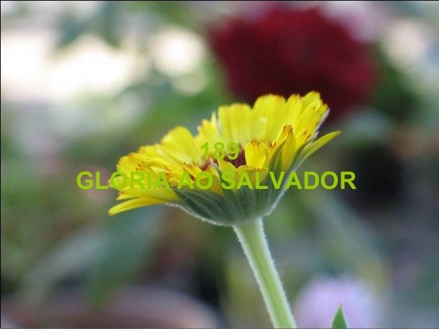 189 GLÓRIA AO SALVADOR