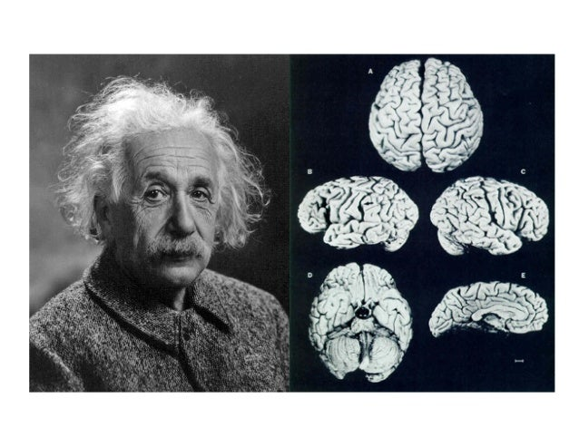 einstein 1905 thesis In 1905 albert einstein rearranged the universe that is well-known what's relatively unknown is the title of the paper in which he did it.