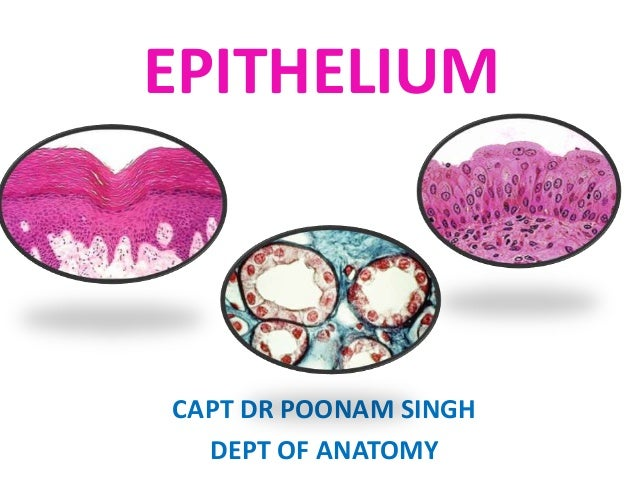 EPITHELIUM  CAPT DR POONAM SINGH DEPT OF ANATOMY