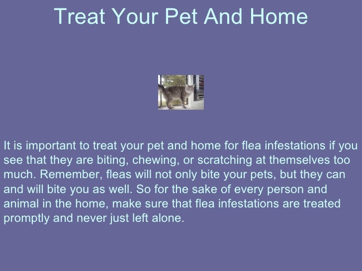 How To Treat Flea Allergy Dermatitis In Dogs At Home