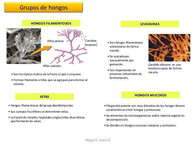 Los parásitos posibles en el vientre