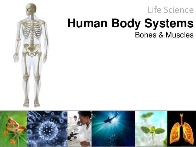 Life Science Human Body Systems Bones & Muscles