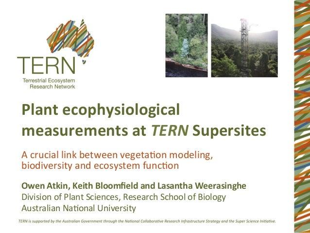 Plant ecophysiological measurements at TERN Supersites A crucial link between vegeta1on modeling, ...