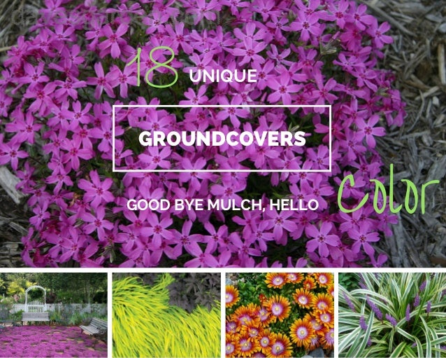 18 beautiful unique groundcover plants for the landscape mightylinksfo