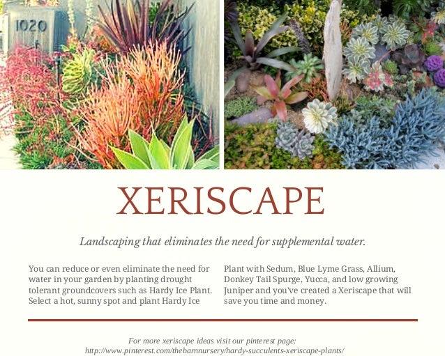18 beautiful unique groundcover plants for the landscape 7 638