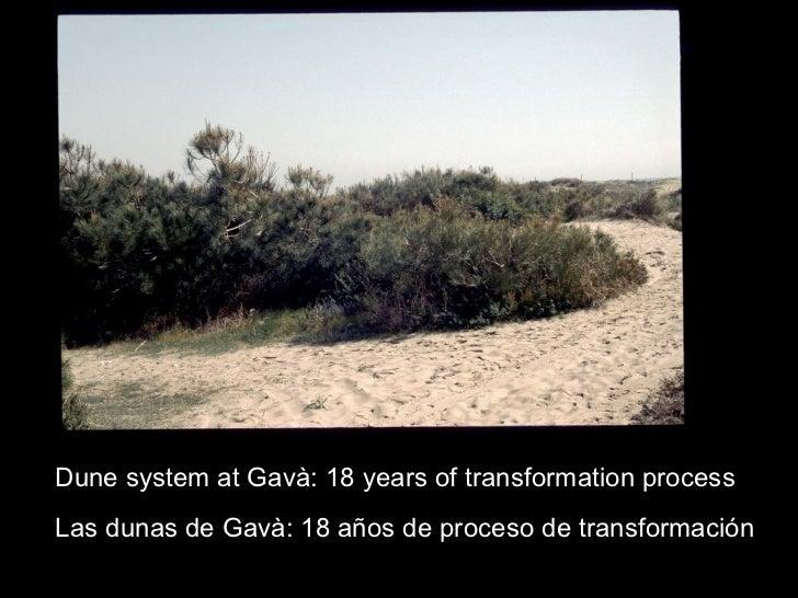 Dune system at Gavà: 18 years of transformation process Las dunas de Gavà: 18 años de proceso de transformación