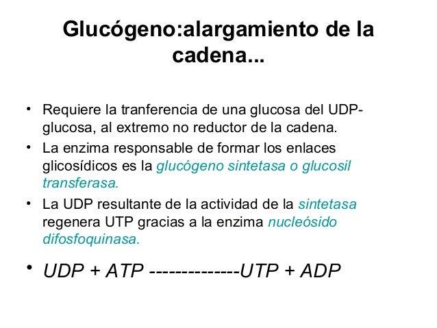 19. metabolismo del glucogeno