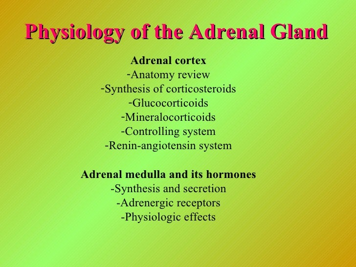 Physiology of the Adrenal Gland <ul><li>Adrenal cortex </li></ul><ul><li>Anatomy review </li></ul><ul><li>Synthesis of cor...