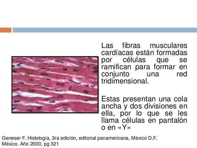19. celula muscular cardiaca