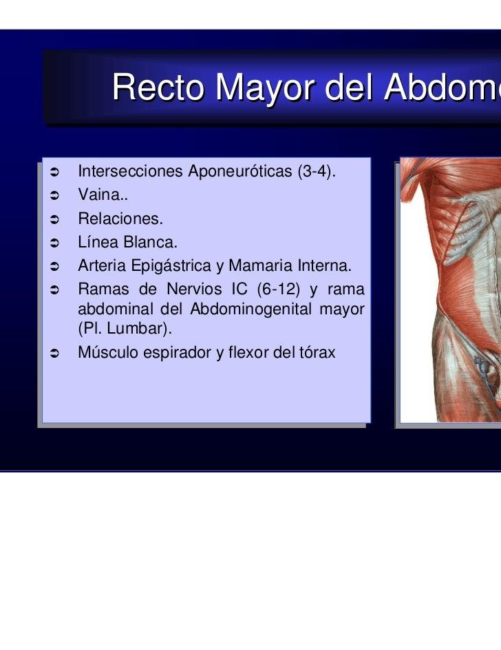 19. pared abdominal