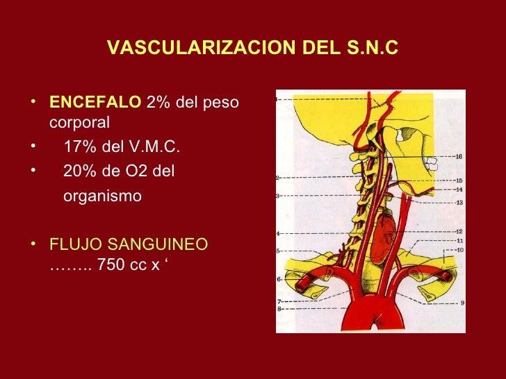 19  Vascularizacion An Slide 2
