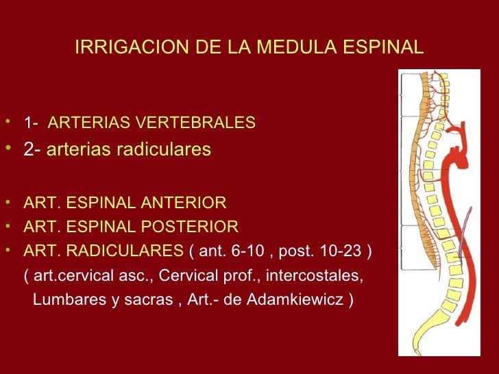 19  Vascularizacion An Slide 3
