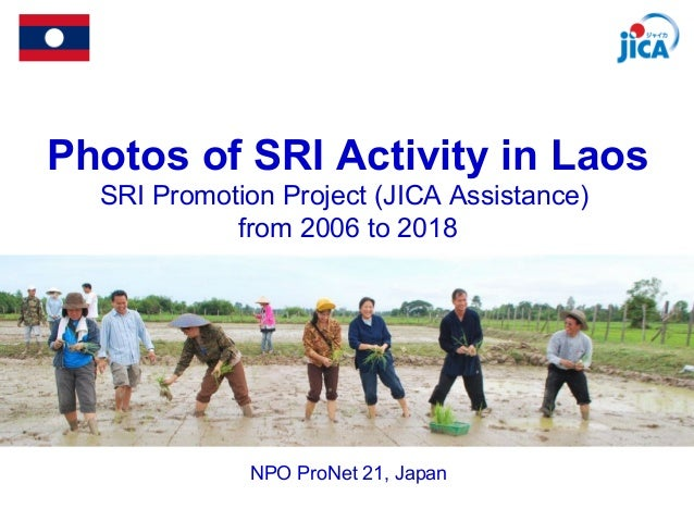 Photos of SRI Activity in Laos SRI Promotion Project (JICA Assistance) from 2006 to 2018 NPO ProNet 21, Japan