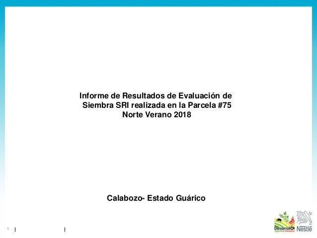 1 Informe de Resultados de Evaluación de Siembra SRI realizada en la Parcela #75 Norte Verano 2018 Calabozo- Estado Guárico