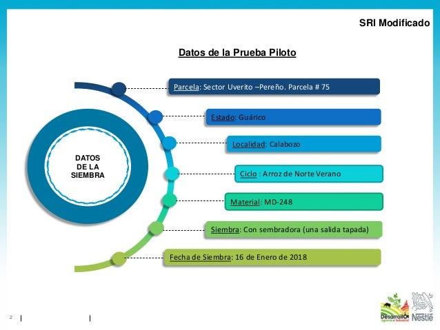 1904 - SRI en Venezuela - Informe Resultados SICA Parcela 75 Norte Verano Calabozo 2018 Slide 2