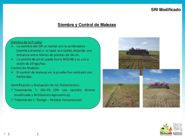 1904 - SRI en Venezuela - Informe Resultados SICA Parcela 75 Norte Verano Calabozo 2018 Slide 3