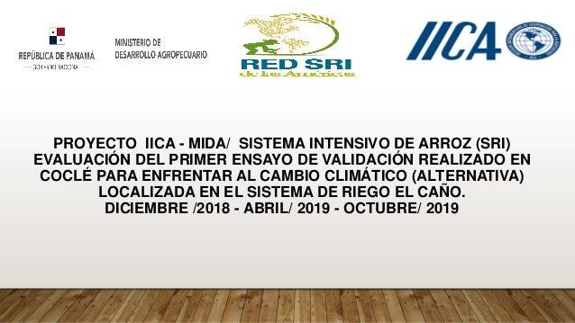 PROYECTO IICA - MIDA/ SISTEMA INTENSIVO DE ARROZ (SRI) EVALUACIÓN DEL PRIMER ENSAYO DE VALIDACIÓN REALIZADO EN COCLÉ PARA ...
