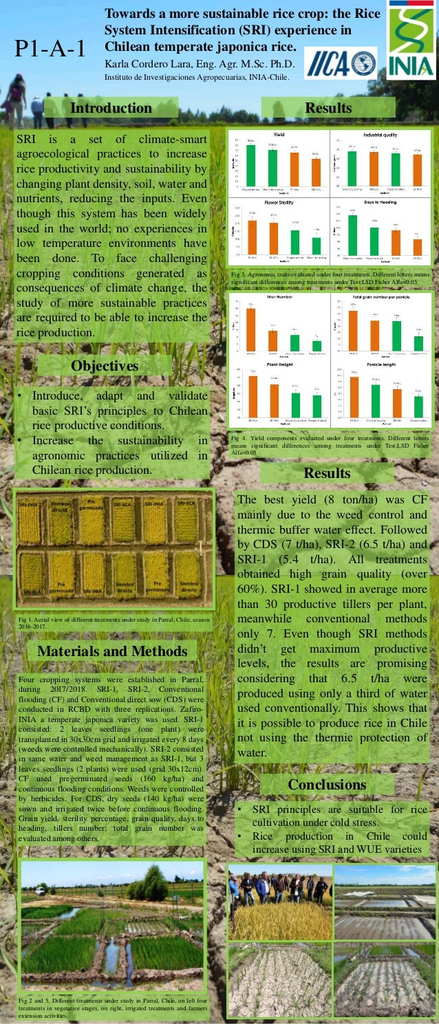 P1-A-1 Towards a more sustainable rice crop: the Rice System Intensification (SRI) experience in Chilean temperate japonic...