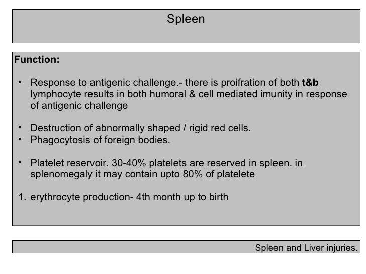 Spleen Spleen and Liver injuries. <ul><li>Function: </li></ul><ul><ul><li>Response to antigenic challenge.- there is proif...