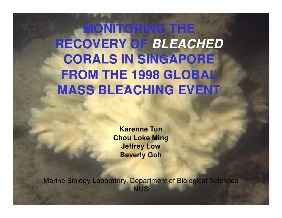 MONITORING THE    RECOVERY OF BLEACHED     CORALS IN SINGAPORE     FROM THE 1998 GLOBAL    MASS BLEACHING EVEN            ...
