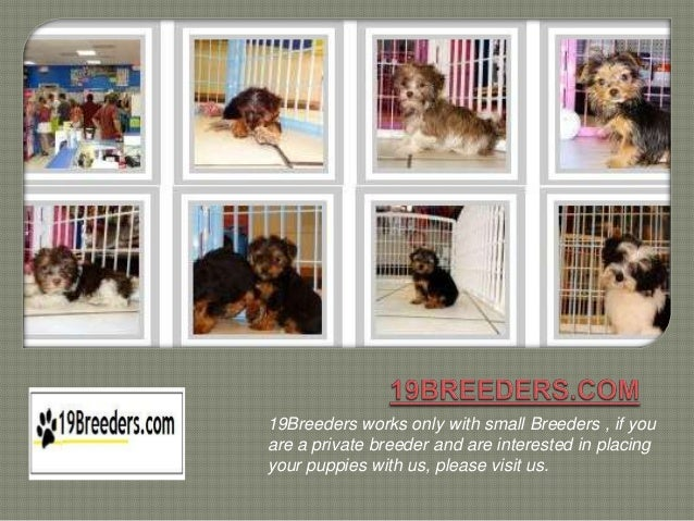 19Breeders works only with small Breeders , if youare a private breeder and are interested in placingyour puppies with us,...