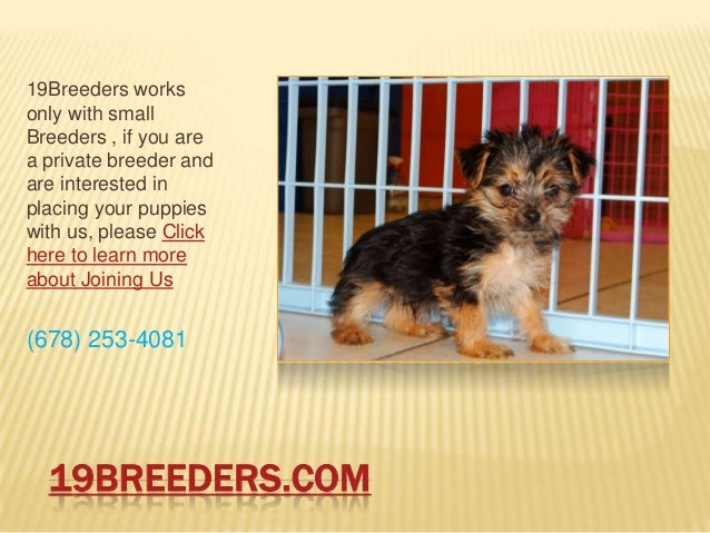 19BREEDERS.COM19Breeders worksonly with smallBreeders , if you area private breeder andare interested inplacing your puppi...