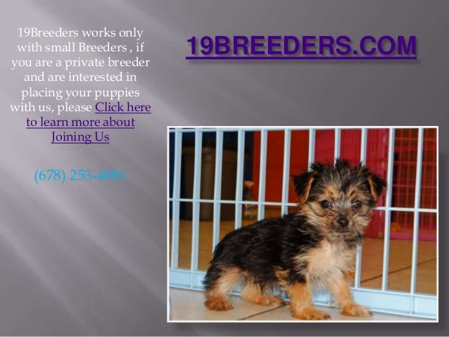 19BREEDERS.COM 19Breeders works only with small Breeders , if you are a private breeder and are interested in placing your...