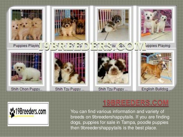 You can find various information and variety ofbreeds on 9breedershappytails. If you are findingdogs, puppies for sale in ...