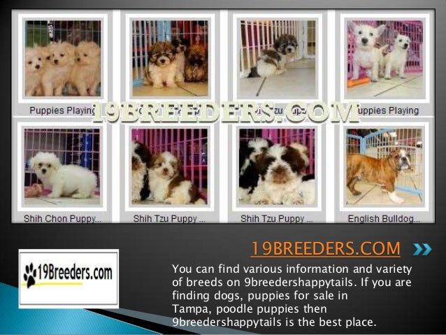 19BREEDERS.COMYou can find various information and varietyof breeds on 9breedershappytails. If you arefinding dogs, puppie...