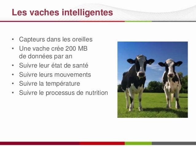 Les vaches intelligentes • Capteurs dans les oreilles • Une vache crée 200 MB de données par an • Suivre leur état de sant...