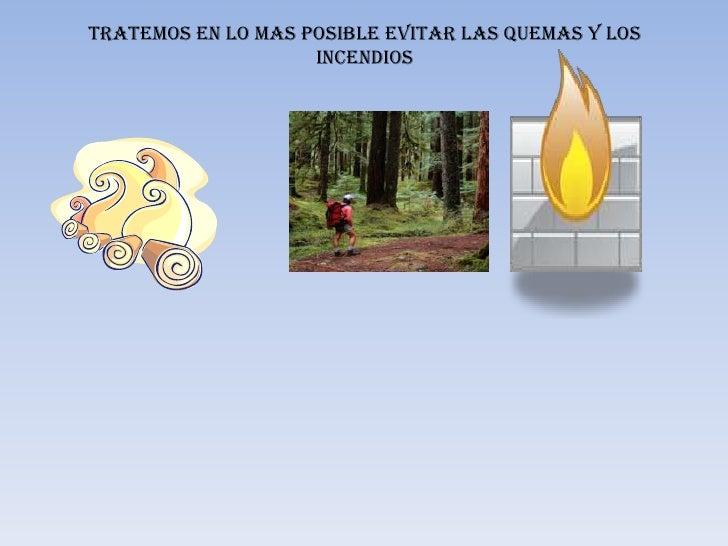 Tratemos en lo mas posible evitar las quemas y los                    incendios