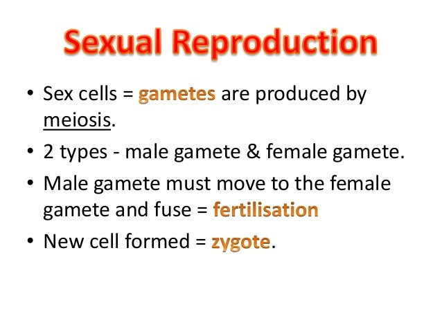Why is mitosis a form of asexual reproduction images 954
