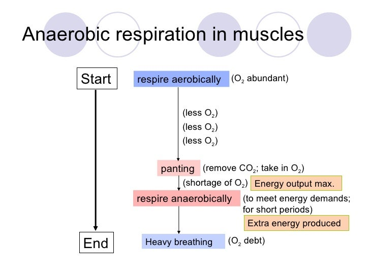 Chapter 10 Respiration Lesson 1 - Aerobic and Anaerobic ...