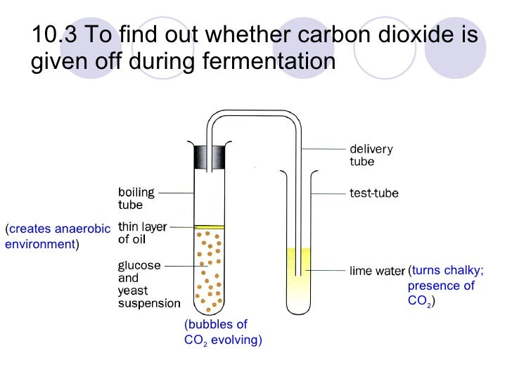 carbon dioxide/ oxygen animals are producing/ consuming essay Oxygen and replace it with carbon dioxide if that happened, all while animals used up the oxygen in the air , plants somehow put it back.