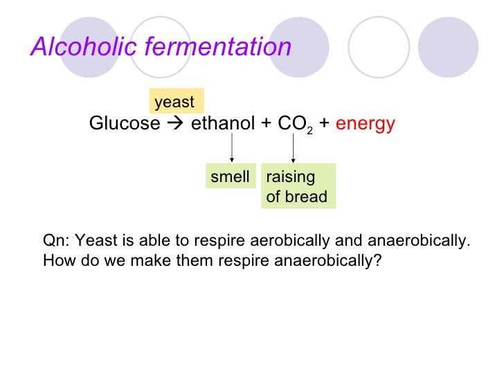 aerobic respiration in yeast Exercise 14 - cellular respiration in yeast 1 in aerobic respiration, cells willbreakdown glucose in the presence of oxygen through certainprocesses to produce co2 and h2o aerobic respirationusually occurs within the cells of animals such as humans.